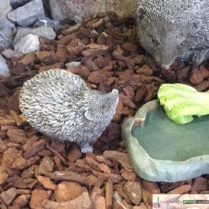 Englischer Antiksteinguss: 010. Tiny Hegehog A, h 8 cm